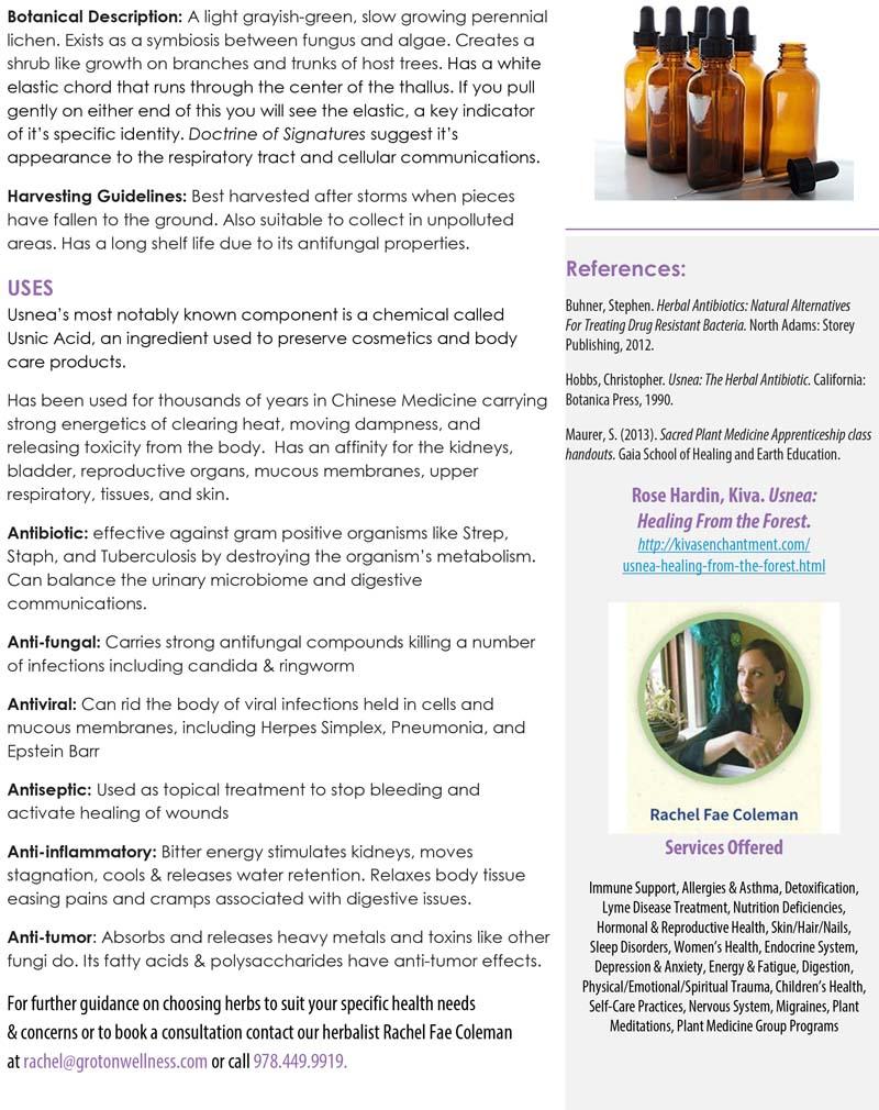 Herb of Month, Usnea, lichen, herbal medicine | Groton Wellness